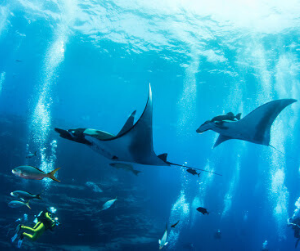 Best diving experience