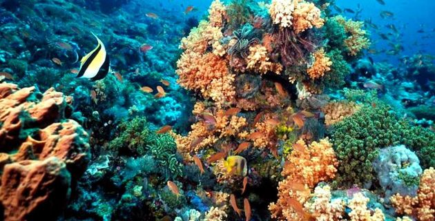 Post covid safest places to scuba-diving