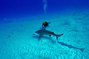Post covid safest places to scuba-diving