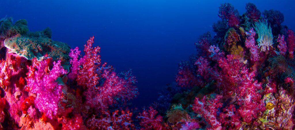 Western Rocky - Mergui Archipelago - MExplor Blog