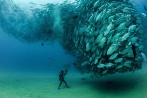 Diving in Cabo San Lucas Marine Park