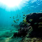Diving in Puerto Morelos