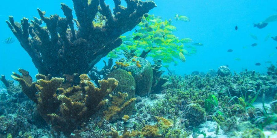 Ojo de agua snorkeling Puerto Morelos